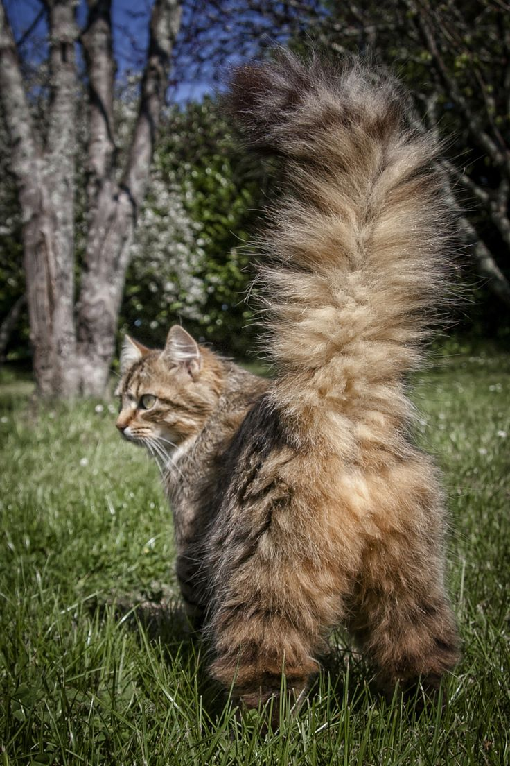 Photograph we call her : feather duster by Olivier Bigot on 500px
