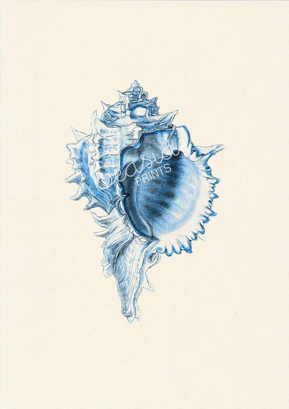 Big Sea Shell Blue Color Life Print