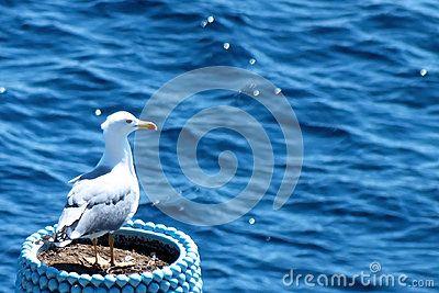 Seagull in ceramic pot checking the sea