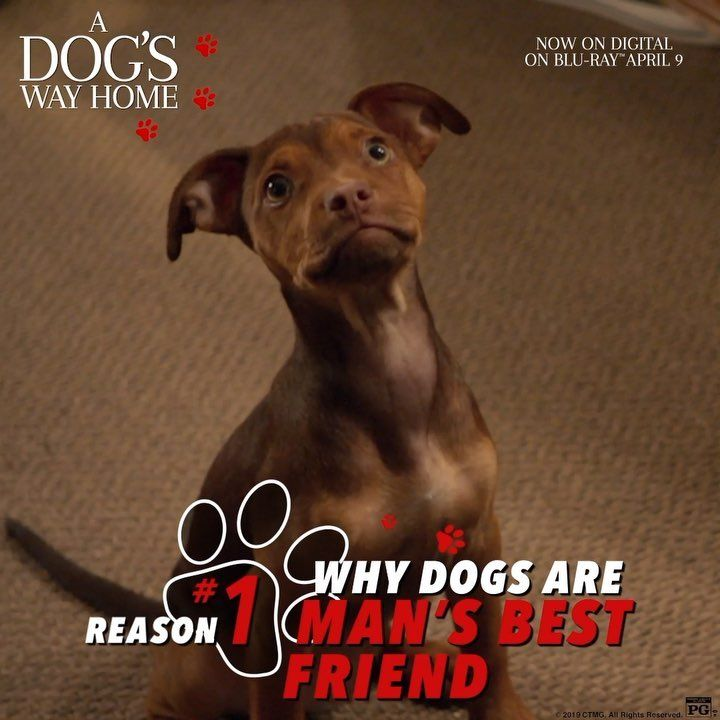 A Dog S Way Home Reason 1 Why Dogs Are Man S Best Friend Adogswayhomemovie Is Available On Digital Mans Best Friend Dogs Best Friends