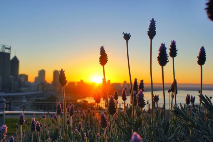 Learn more about Wildflower season in #WesternAustralia
