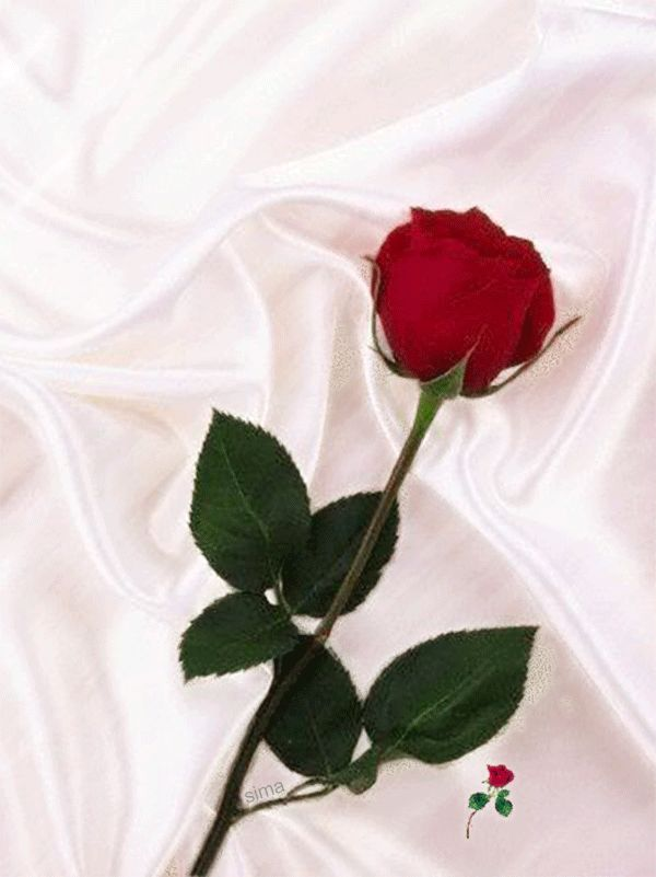 картинки розы я люблю тебя так сильно россии
