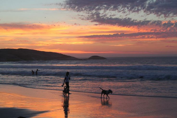 One of life's great pleasures is walking dogs on a beach... Read more about Cape Town's beaches: http://www.capetown.travel/attractions/category/beaches