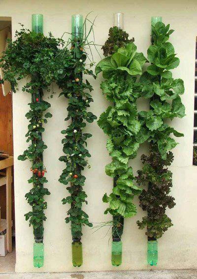 Instalación de botellas de plástico, colocadas en la pared para crear un jardín urbano #reciclaje