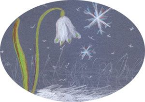 Waldorf Winter Festivals fairy story of the Snowdrop