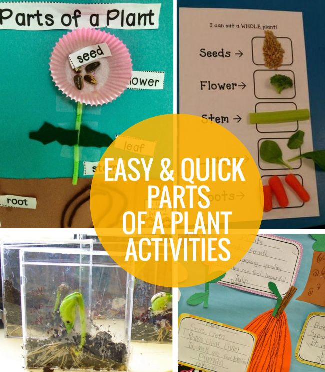 Quick Stem Challenge For Kids: 4 Easy And Quick Parts Of A Plant Activities
