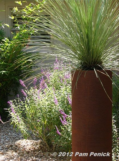 27 best native plant ideas for pots  hanging baskets and raised beds images on pinterest