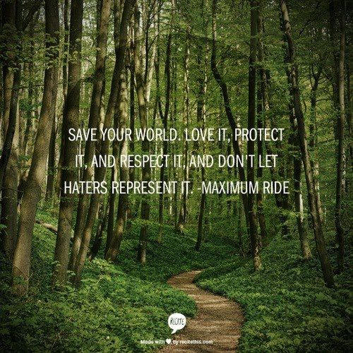 Forest Quotes: Pinterest