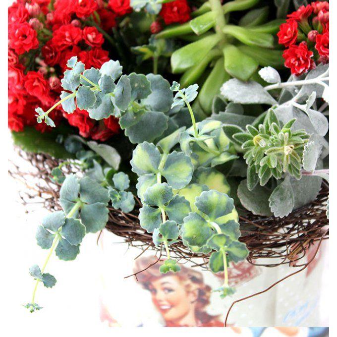 Le Bouquet Succulent : bouquet fleuri, champêtre et original pour la fête des mères, livraison de bouquets