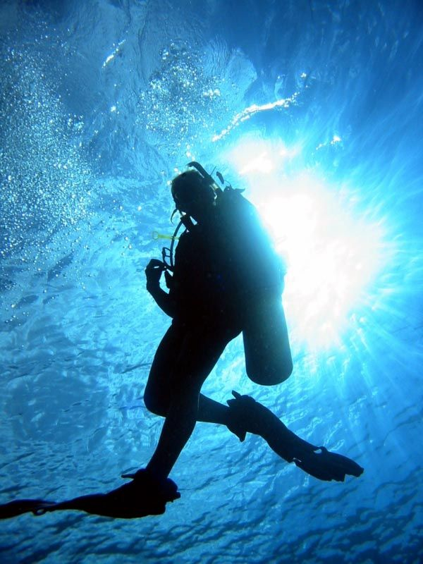 Become a certified Scuba Diver.