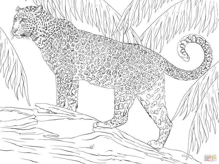 Jaguar coloring pages Google Search VBS t Jaguar