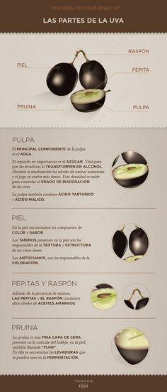 Las partes de la uva! #Vino #Infografias