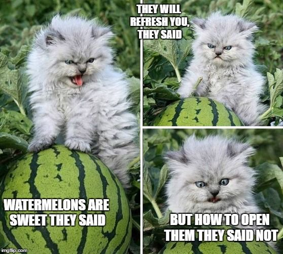 Annoyed cat | WATERMELONS ARE SWEET THEY SAID BUT HOW TO OPEN THEM THEY SAID NOT THEY WILL REFRESH YOU, THEY SAID | image tagged in memes,cats,watermelon,angry cat | made w/ Imgflip meme maker