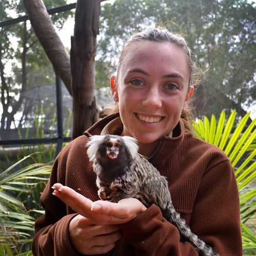 Hunter Valley Zoo - Marmosets - an amazing experience