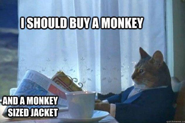 i should buy a monkey @Linna Fredström