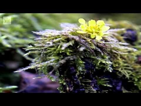 Ulos luontoon - Kevätseuranta (4/5) Kevään kuhinaa 2014 - YouTube