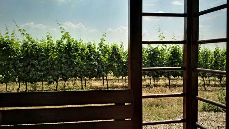Pohled na vinice Znovín :)