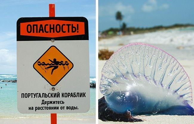 Опасности, которые могут испортить отдых в экзотических странах, и как их избежать