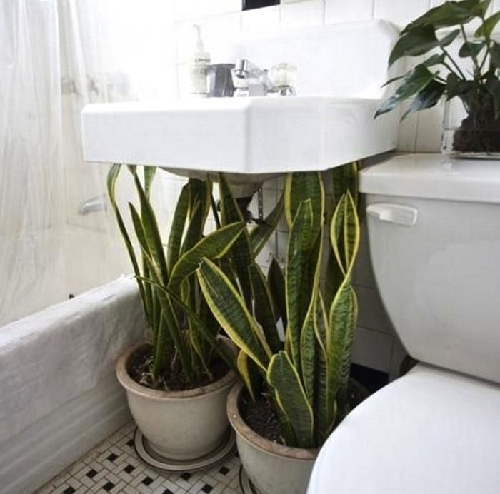 Air Purifying Plants For Bathroom: 1000+ Ideas About Air Purify Plants On Pinterest