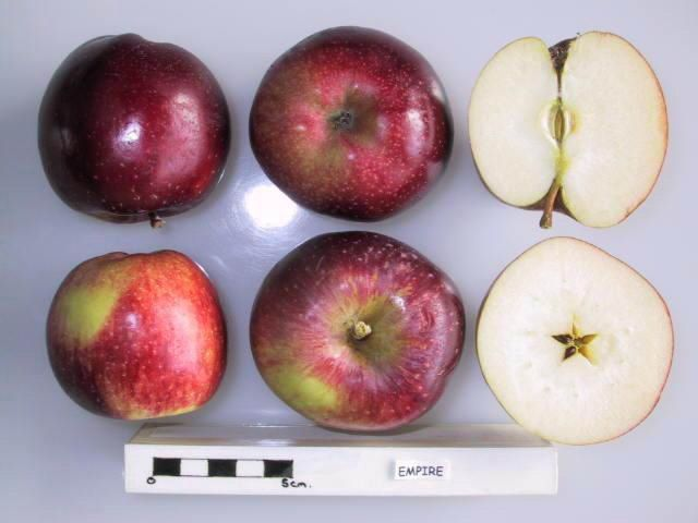 Empire Mid Late Season Colour Is An Intense Marroon Red Overlying A Light Green Background Parents Are Delicious And Apple Empire Apples Apple Varieties