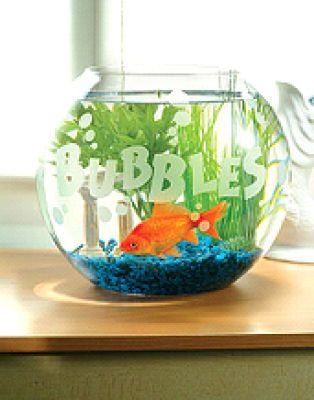 17 best Old household items= new fish tank ideas images on ...