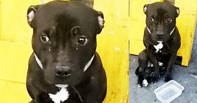 Aggiornamento: cane abbandonato alla stazione ferroviaria di Eastbourne