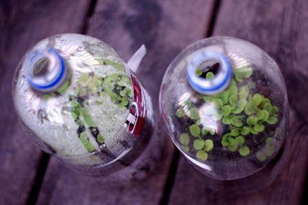 The Plastic Drink Bottle Mini Greenhouse