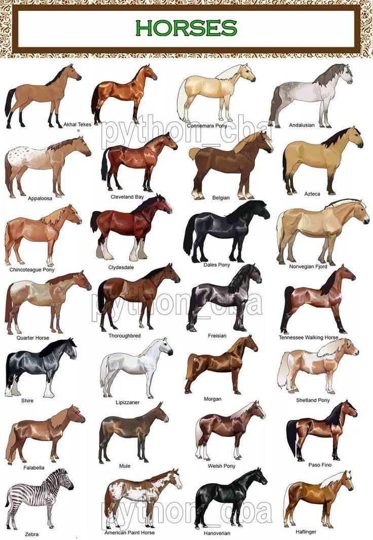 Coleccion 3 Posters Razas De Caballos 42 30 Cm Nuevos Horse