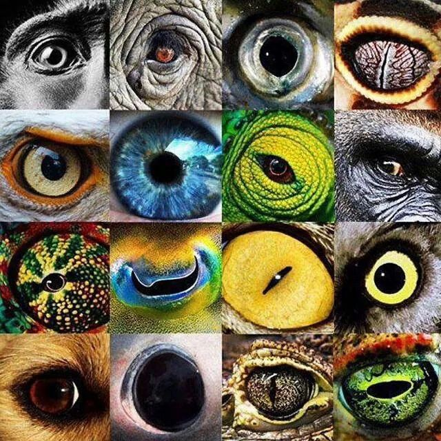 Eyes of the nature
