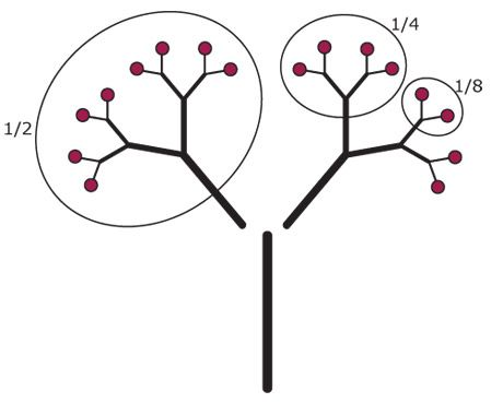 Fraction Tree This Fractivity uses a simple model of an