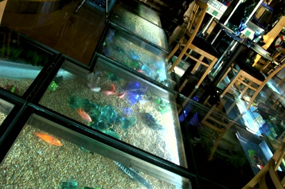 23 best glass floors images on pinterest glass floor for Floor fish tank