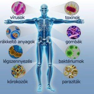 Immunrendszer | Socialhealth