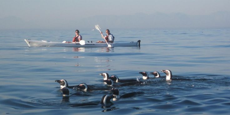 :: Simonstown Sea Kayak Tours ::- see Penguins and Whales paddling in False Bay, Cape Town -::