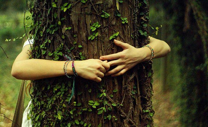 A fáknak gyógyító erejük van – Fajták és hatások. Erős pozitív aurával rendelkeznek, amit azonnal érezhetsz, mihelyt belépsz egy fa koronája alá. A fa energiája jótékonyan hat ránk:megtisztít…