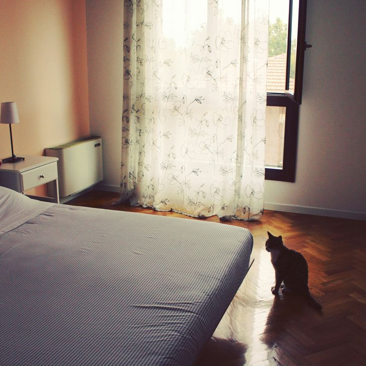 Camera con gatto