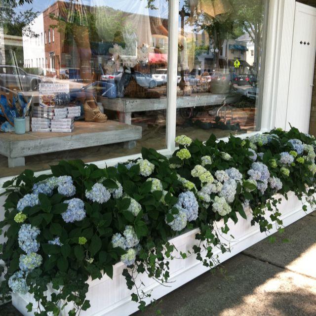 Hydrangea planter boxes outside Ralph Lauren in East Hampton. Love!