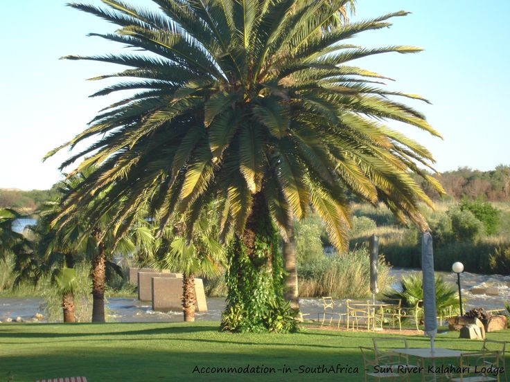 Palm laiden gardens at Sun River Kalahari Lodge. http://www.accommodation-in-southafrica.co.za/NorthernCape/Upington/SunRiverKalahariLodge.aspx