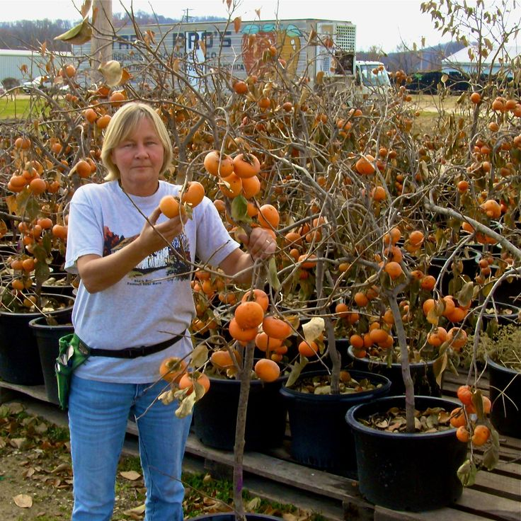 Expert Advice on Growing Fruit Trees in Containers