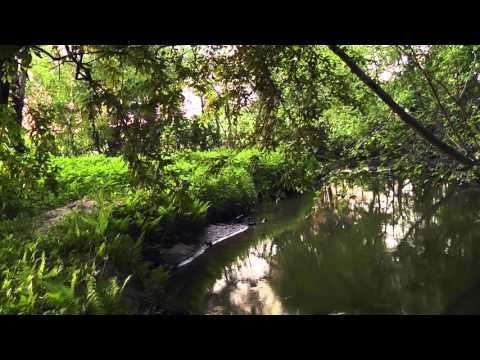 футаж hd - река, лес, весна, соловей - YouTube