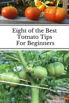 Tomatoes were among the first plants I starting growing in my garden. These are the tips that help me the most and I still use each season! More