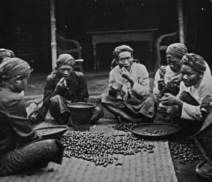 Sejarah kopi di Indonesia   INAdrinks