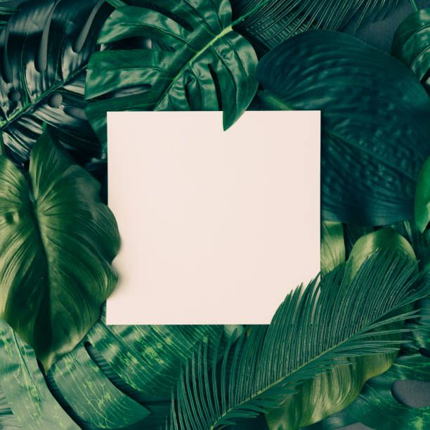 Creative Tropical Green Leaves Layout With Copy Space Nature Spring Concept Flat Lay Stock Photo Flower Frame Plant Wallpaper Background Design Learn how to design like a pro with fonts, colour and layout. pinterest