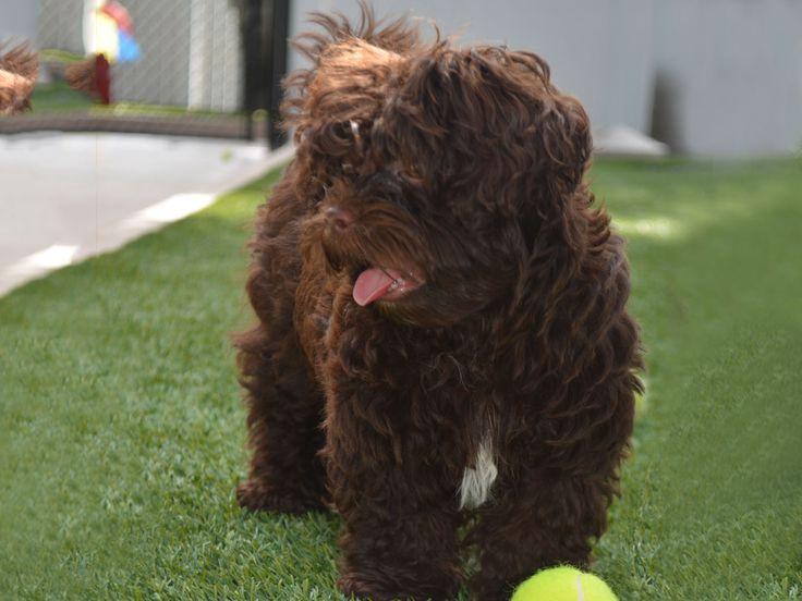 Best 25 Artificial Grass For Dogs Ideas On Pinterest