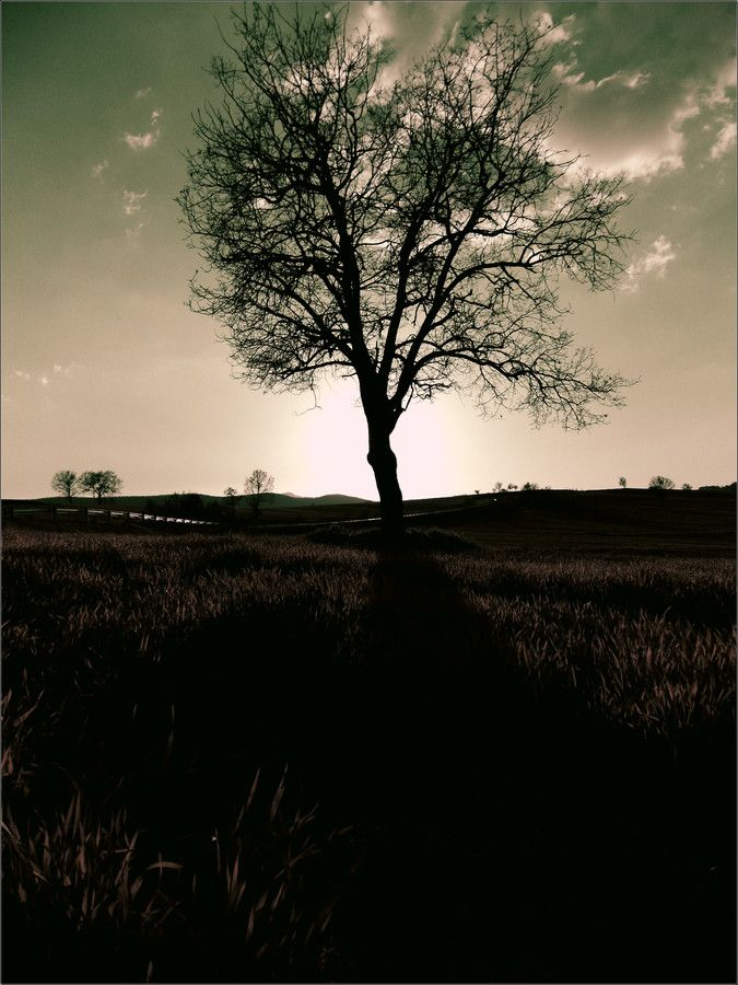 tree hugs my heart by George Kotanitsis on 500px