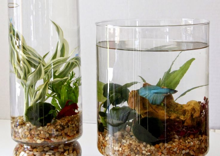 17 best ideas about Indoor Water Garden on Pinterest Indoor