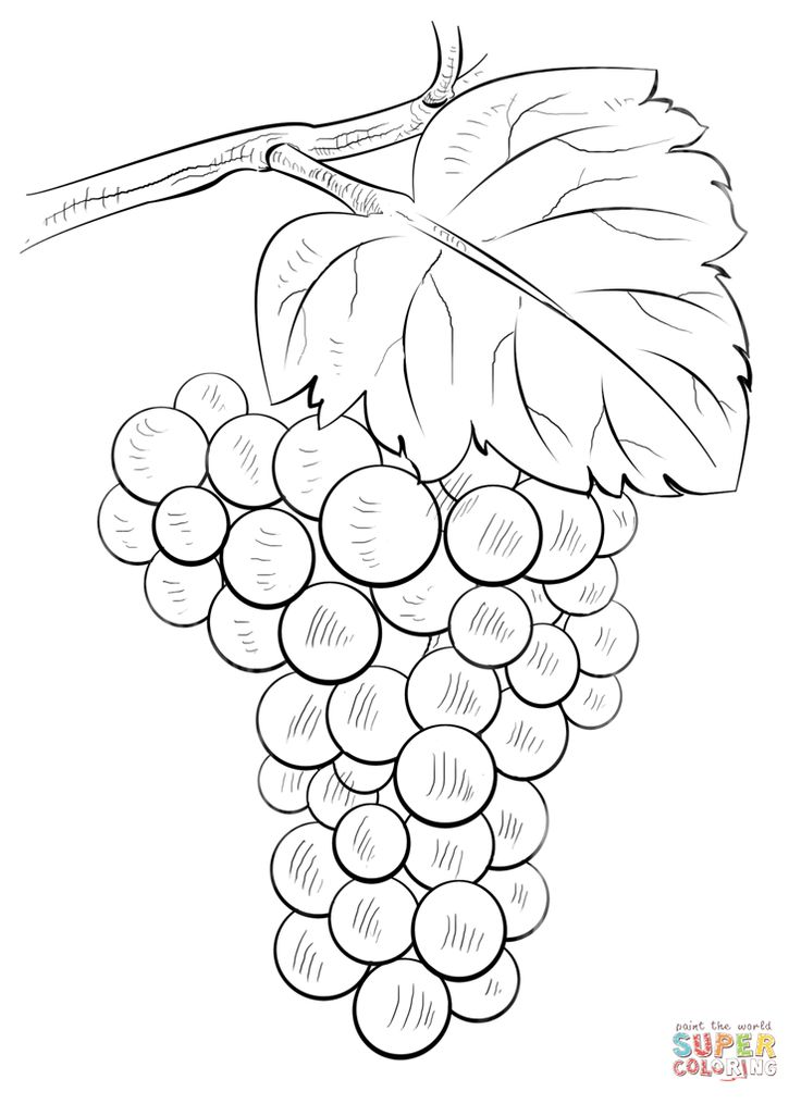 Grapes coloring