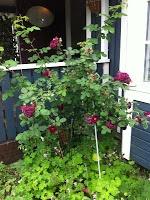 Bland rosor och garner: Trädgård