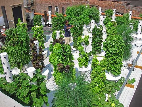 17 Best 1000 images about Grow your own organic Aeroponic home tower