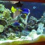 Top 10 Saltwater Aquarium Supplies Owners Should Have - http://www.mypetarticles.com/top-10-saltwater-aquarium-supplies-owners-should-have/#more-452