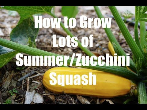How to Grow Striped Zucchini Like A Pro this Summer